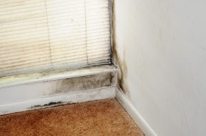 FEMA Warns Against Mold Issues