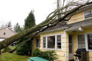 wind or storm damage