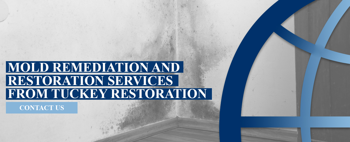 Tuckey Restoration Mold Remediation and Restoration Services